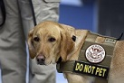 TSA seeks to pull funding from bomb-sniffing dog teams at rail stations, airports